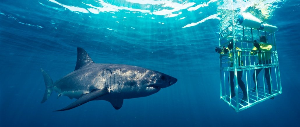 shark cage diving south africa reviews